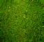 lawn care montgomery