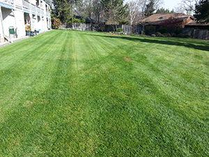 Lawn Care Montgomery Al